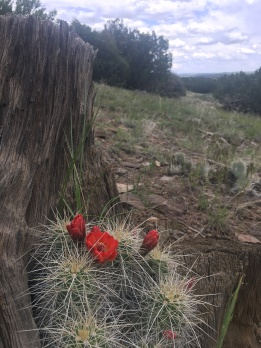 Blooming cactus on hike.